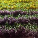 Середина июля - время сбора трав