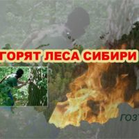 Горят леса Сибири. При чём тут мы?